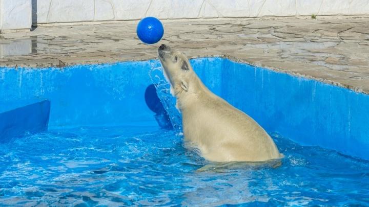 В ростовский зоопарк с санками будут пускать бесплатно