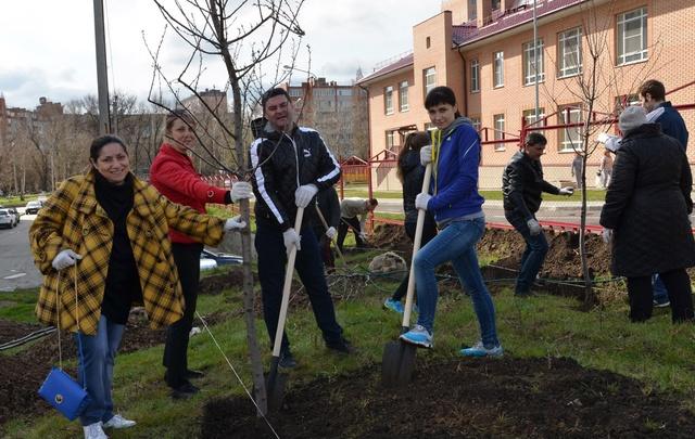 В Аксайском районе в субботу посадили 2,5 тысячи деревьев