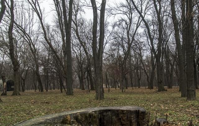 В Ростовской области с начала года клещи покусали уже 57 жителей