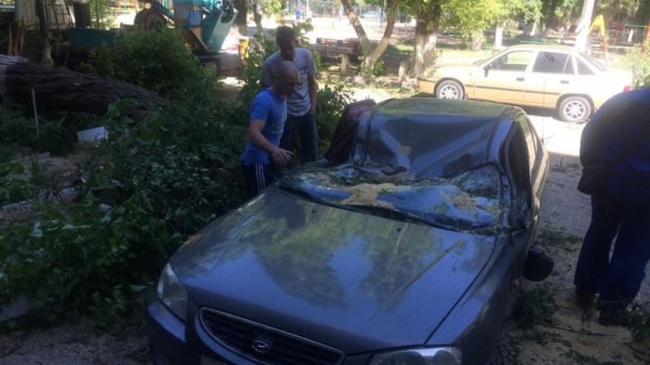 «Уставшее» от сильного ветра дерево расплющило иномарку в  Волгограде
