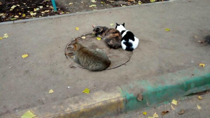 Жители «Кошелева» просят построить приют для бездомных животных в микрорайоне