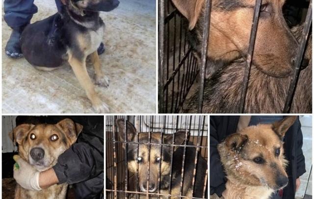 Срочно: в Ярославле ищут помощь животным после рук отловщиков