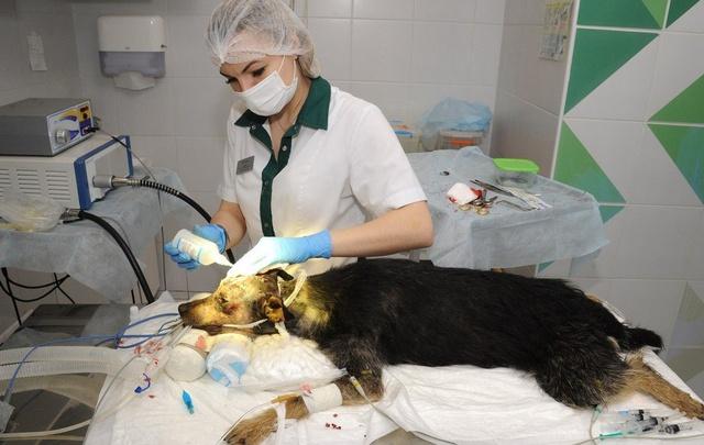 Застреленная в Волгограде живодером на велосипеде собака скончалась в ветеринарной клинике