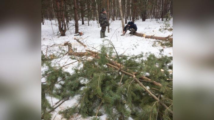 Собственник показал документы: полиция проверила вырубку леса в новом микрорайоне Челябинска