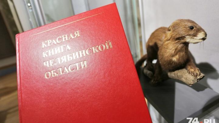 Истребляемые китайцами птицы попали в Красную книгу Челябинской области