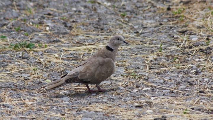 Из лесов Волгограда улетели почти все птицы