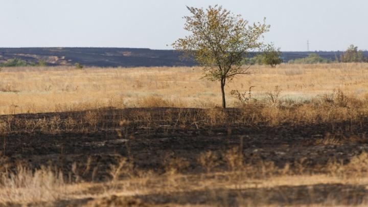 Волгоградская область начала гореть, не успев до конца просохнуть