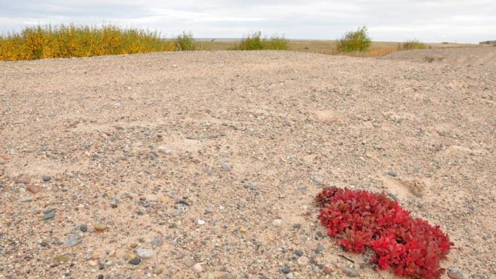 В Лешуконском районе при ремонте дорог использовали незаконно добытый песок