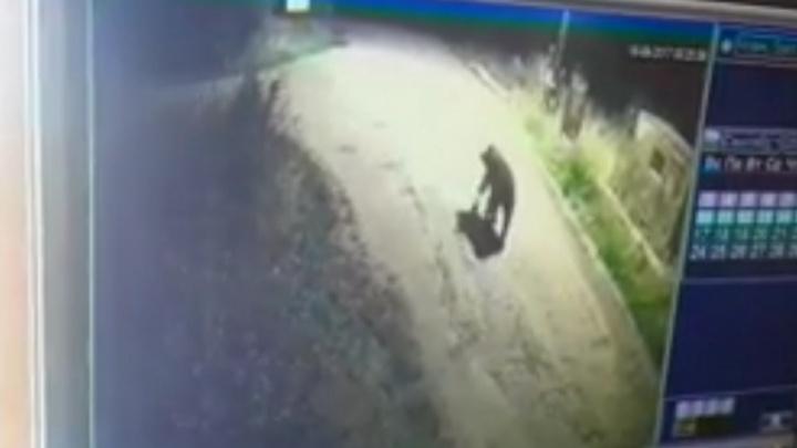 Камера наблюдения сняла медведя, пришедшего полакомиться мусором на дачи под Тюменью