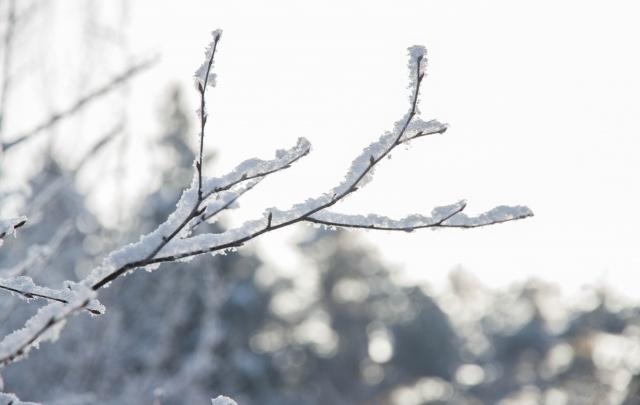 В Перми на этой неделе ожидается до +9 градусов