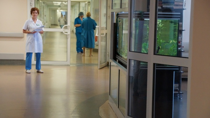 Регистрируется до 37 случаев: в Самаре зафиксировали пик заболеваемости мышиной лихорадкой