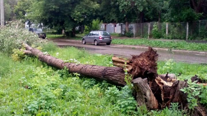 По Самарской области прошелся сильный шторм: сломаны сотни деревьев, повреждены десятки автомобилей