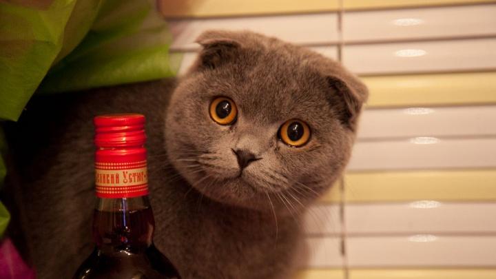 Архангельские полицейские избавили северян от 180 литров незаконного алкоголя