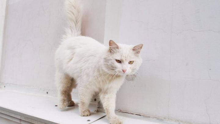 День котиков, сухопутных и морских: читатели 161.ru поделились фотографиями питомцев