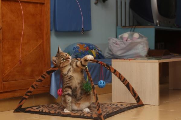 Кошкам-погорельцам с Театрального ищут новый дом