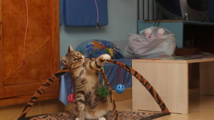 «На улицу они уже никогда не вернутся»: как спасали кошек после пожара