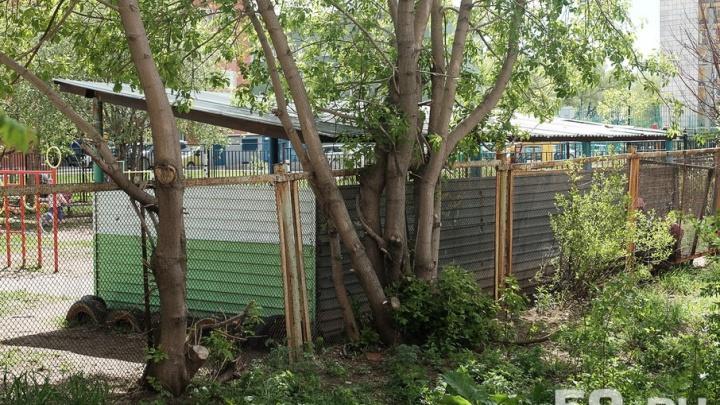 Из-за шквального ветра в школах и детсадах Перми спилят ветки и уберут опасные конструкции