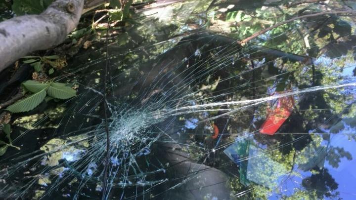 На турбазе под Волгоградом массивный дуб раздавил иномарку