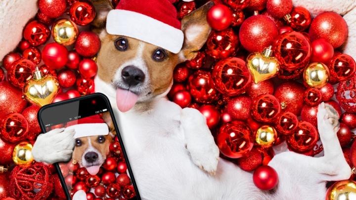Новый год с желтой собакой: топ-лист площадок для главной ночи