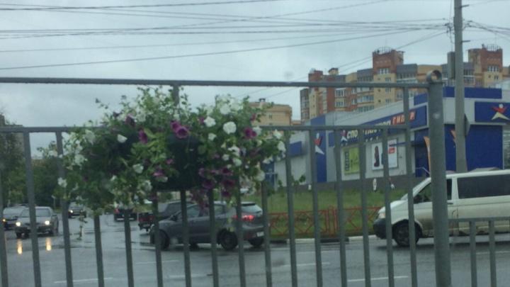 На разделительном заборчике Московского проспекта повесили петунии