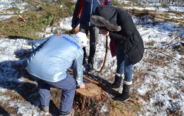 Как под Тюменью ловят «черных» лесорубов: репортаж из нижнетавдинского леса