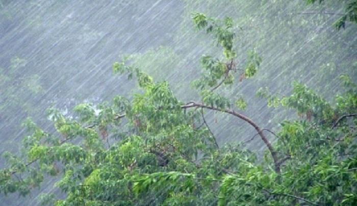 Во время ливня в Ростове «потонули» несколько улиц и упало дерево