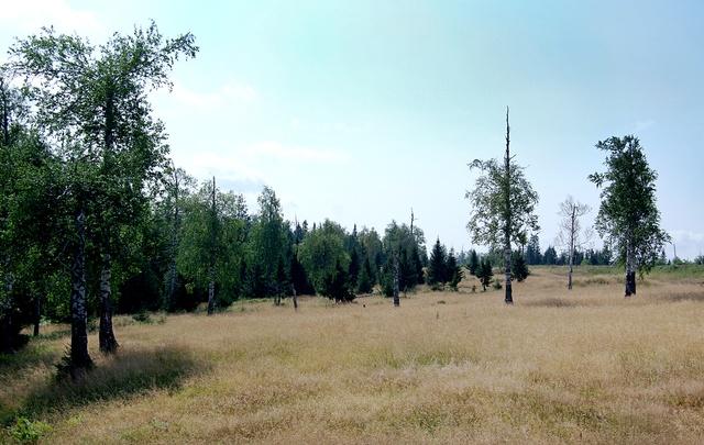 В Пермском крае клещи укусили семь человек