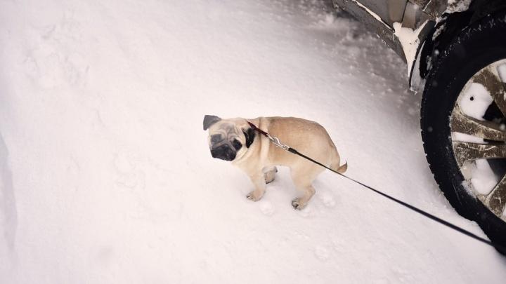 Собачья жизнь: ярославца посадили в колонию на три с половиной года за кражу поводков