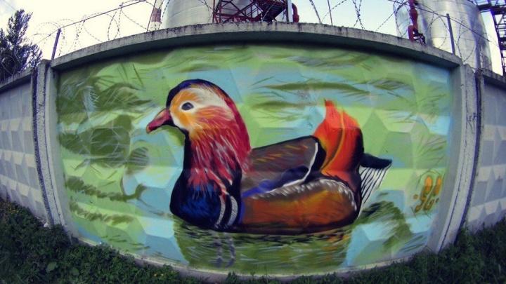 В Ярославле нарисовали портрет экзотической утки-мандаринки