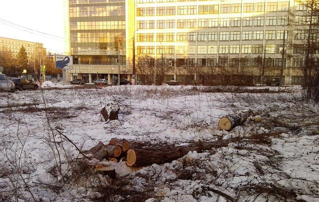 Возле памятника Курчатову посадят 327 полутораметровых деревьев