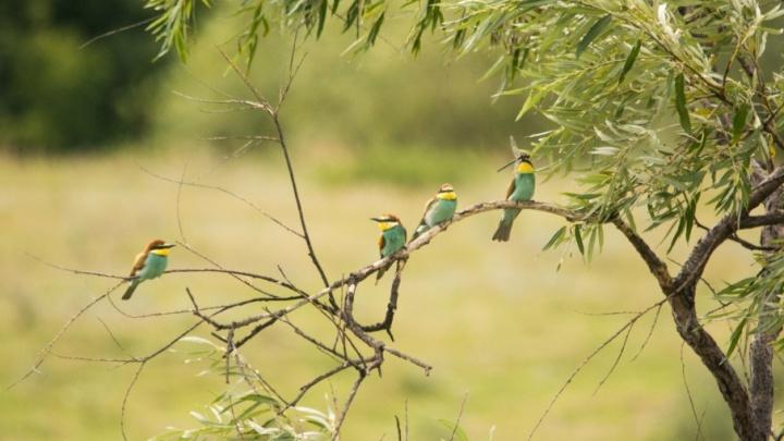 В Тюменской области впервые обнаружили птиц, которые обычно обитают в Европе и зимуют в Африке