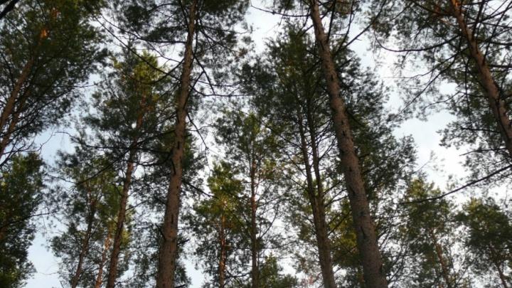 Спасатели Котласского района нашли заблудившуюся в лесу местную жительницу за несколько часов