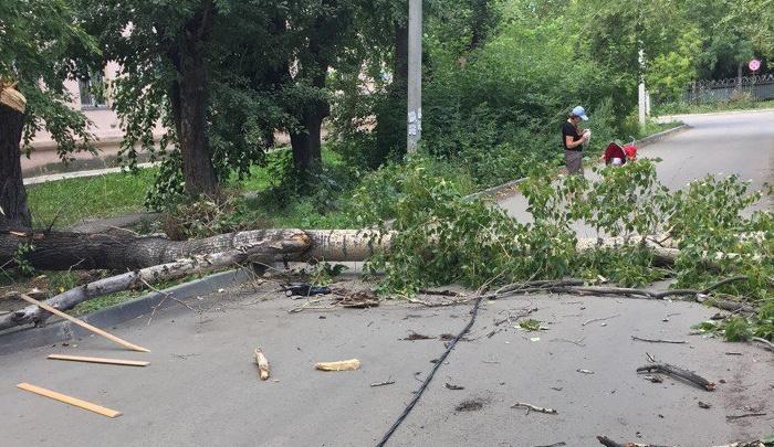 Упавшее от сильного ветра дерево оборвало провода в Ленинском районе