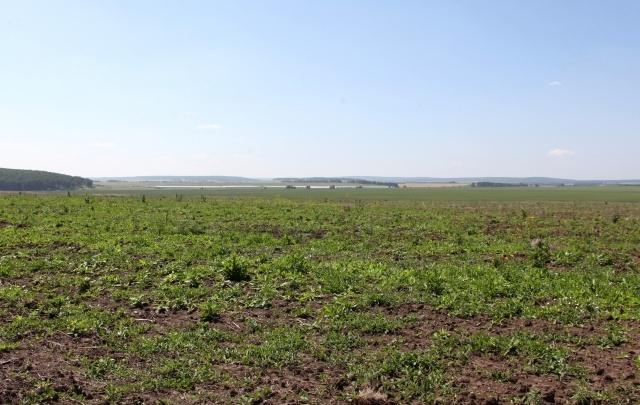 Единороссы мониторят исполнение закона об обороте земель сельхозназначения