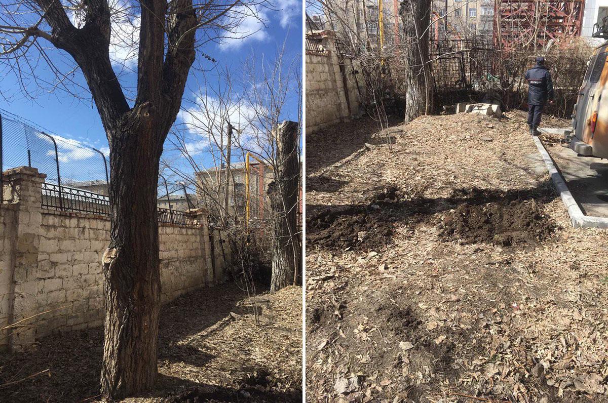 Деревья вдоль забора — зелёный щит, который отгораживает дом от производства