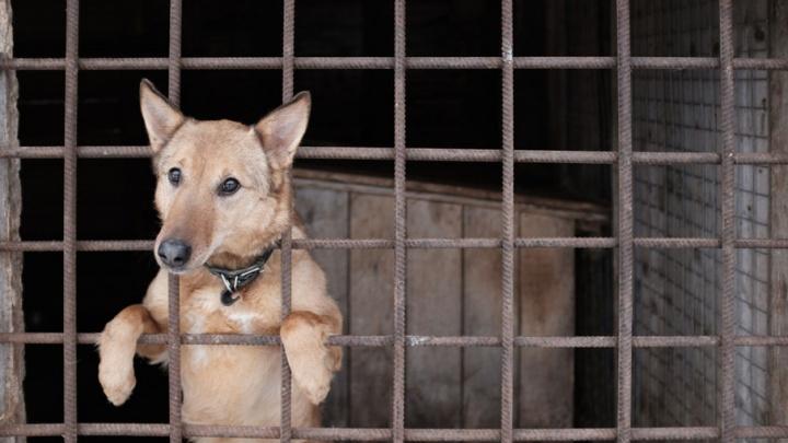 Новые будки и реконструкция кухни: в Перми начался ремонт муниципального приюта для животных
