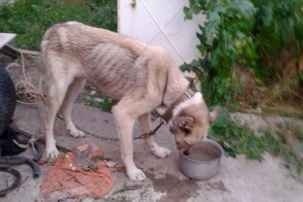 Одна из выживших собак имеет очень жалкий вид