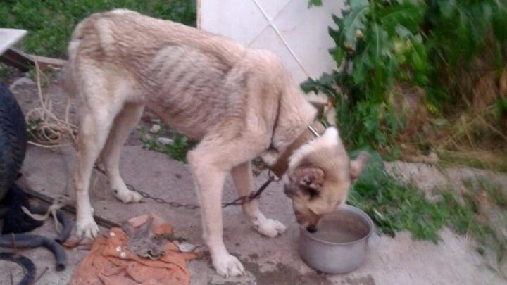 Житель Ростовской области устроил «концлагерь» для своих собак
