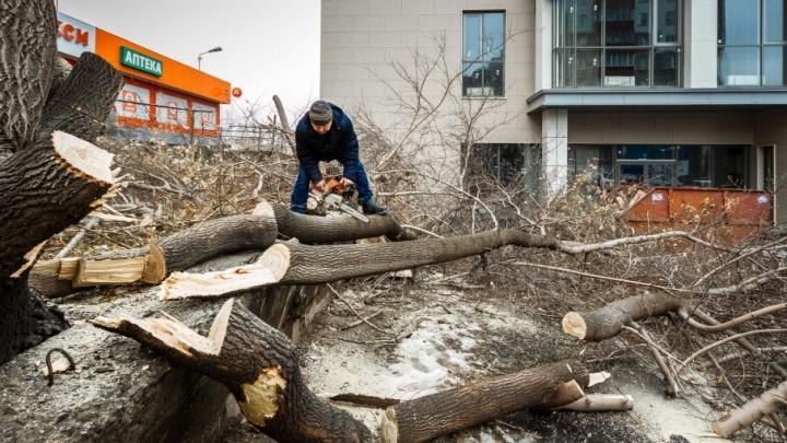 Возле нового торгового центра в Челябинске спилили деревья