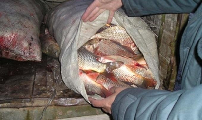 Год исправительных работ и полмиллиона рублей штрафа получил житель Аксая за незаконный вылов рыбы