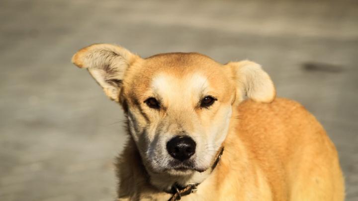 В Ростове травят собак: как оказать животному первую помощь и куда жаловаться, если ваш питомец погиб