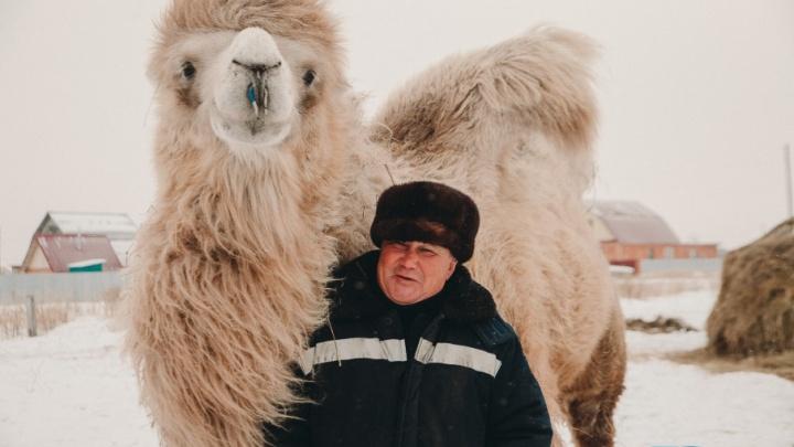 Кто этот верблюд: где и как живет тюменский Кеша, который снимался в фильме и стал звездой YouTube
