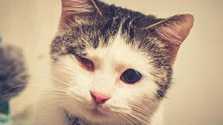 Кошка с выжженным глазом не может найти в Волгограде семью