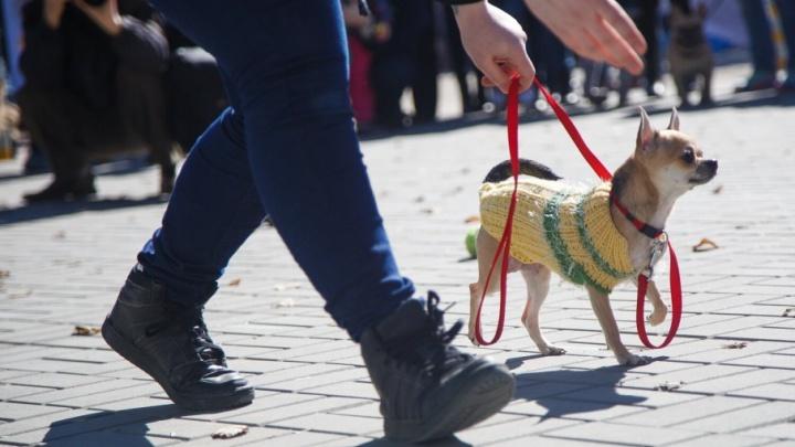 Волгоградка украла привязанную возле «Покупочки» собаку