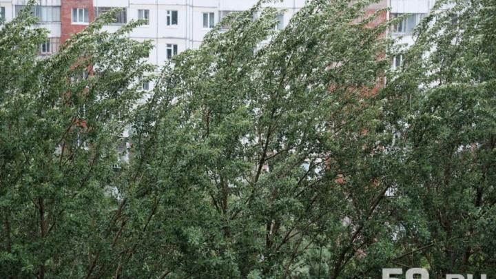 МЧС предупреждает: в Прикамье ожидаются сильные порывы ветра