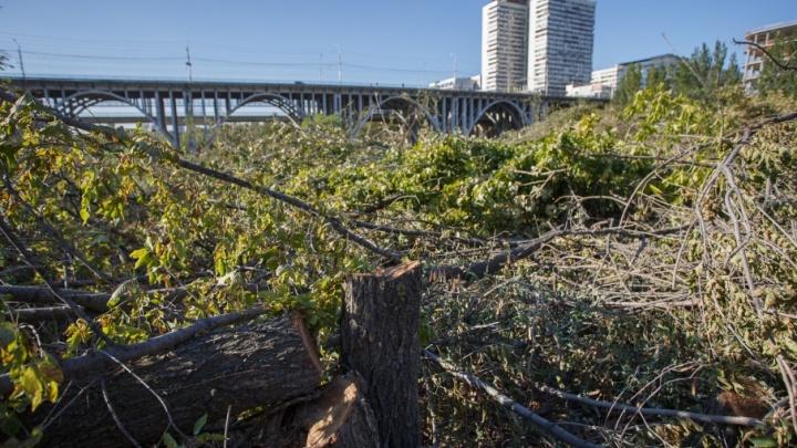 Дали дуба: в Волгограде начался распил поймы реки Царицы