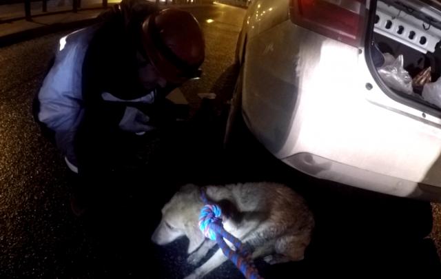 В Ярославле спасли собаку, застрявшую в подвеске машины после ДТП: фоторепортаж