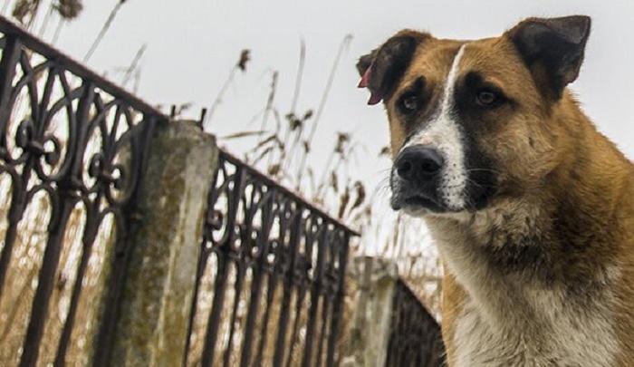 На Дону стая бродячих собак атаковала троих подростков