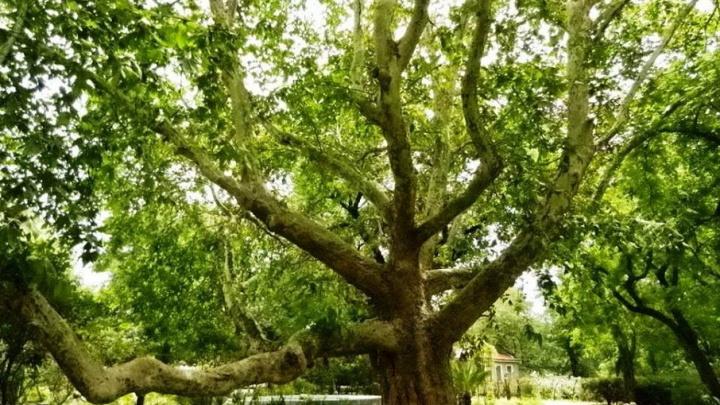 Ростовчане решили помочь городской администрации посадить деревья