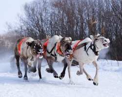 Открываем восемь чудес Большого Урала для новогодних поездок